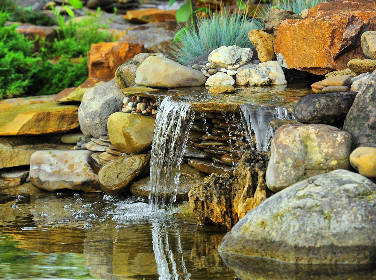 pond-lifstyle