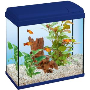 Tetra-Dory-Aquarium-Mag-Aquarium