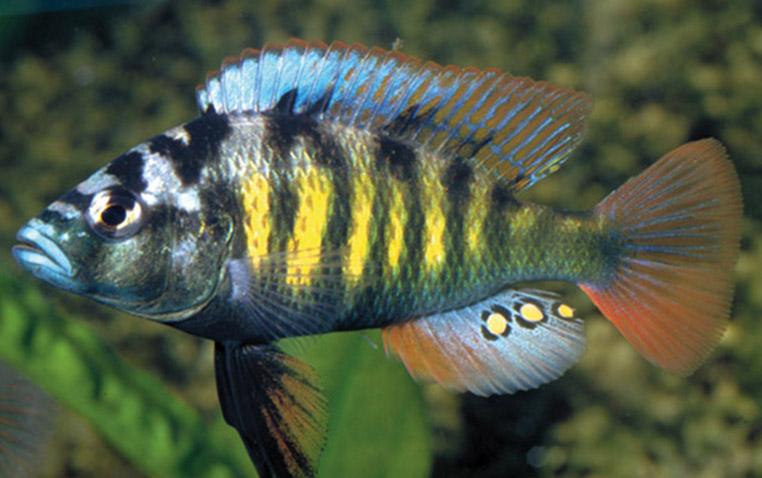 fish-egg-spots